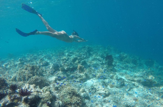 Flores snorkeling